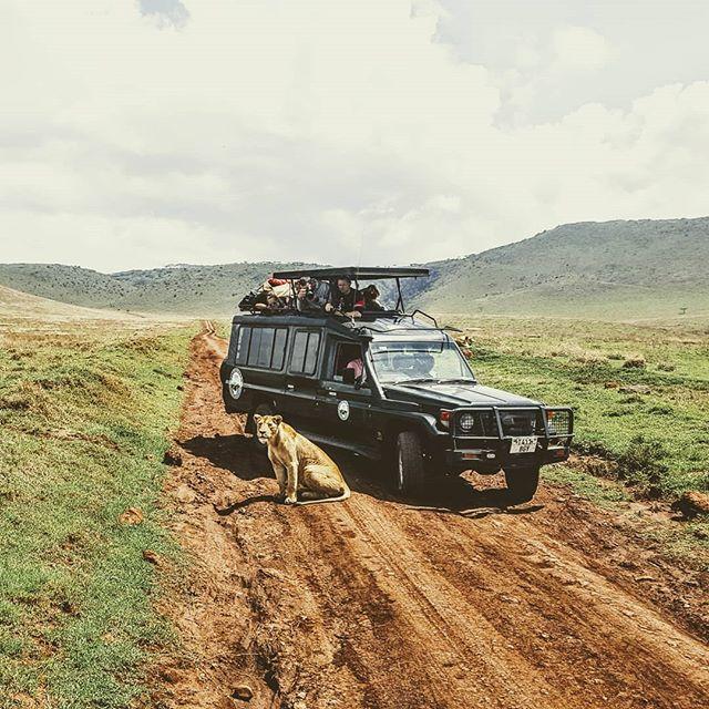 kilithon kilimanjaro tanzania safari serengeti ngorongoro